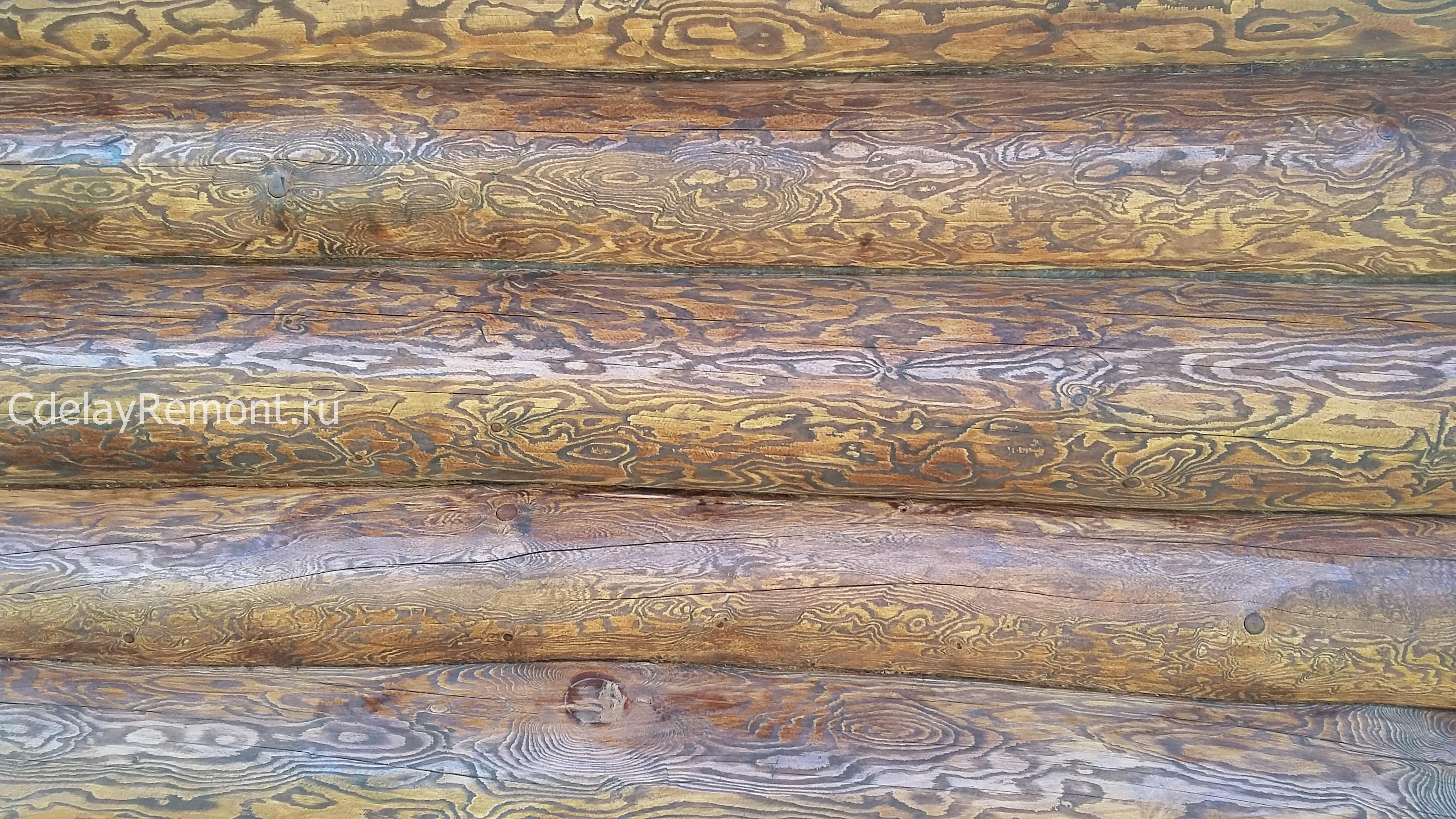 Первый слой лессирующей краски на бревнах